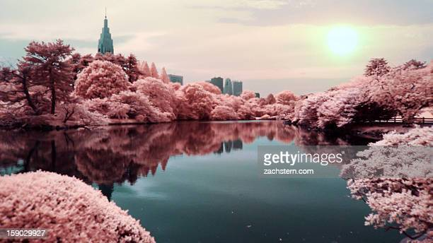 Surreal lake with pink trees skyscrapers and sun