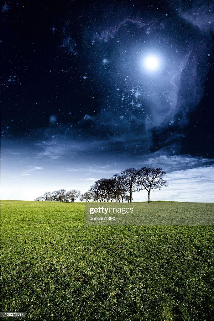 Surreal Mystical Woodland Landscape : Stock Photo