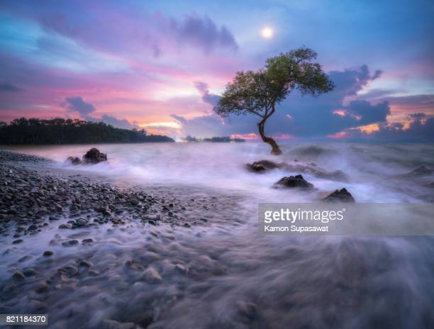 Surreal picture of alone tree in Ban Pak Had and beach with surge tidal/wave at southern of Thailand