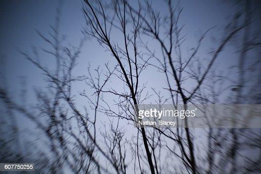 Surreal trees : Stock Photo