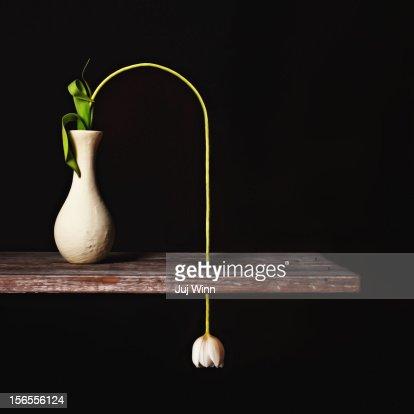 Surreal Tulip Still Life on Black
