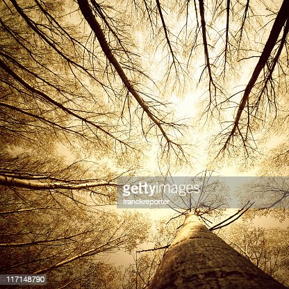 Surrounded by Tall Trees, low angle shot - Autumn season