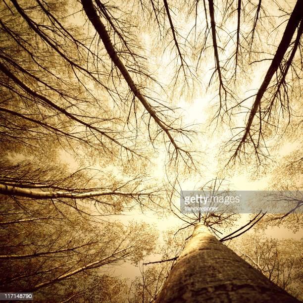 Circondato da alti alberi, basso angolo girato-autunno stagione