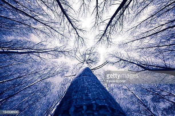 Entouré de grands arbres, forêt magique
