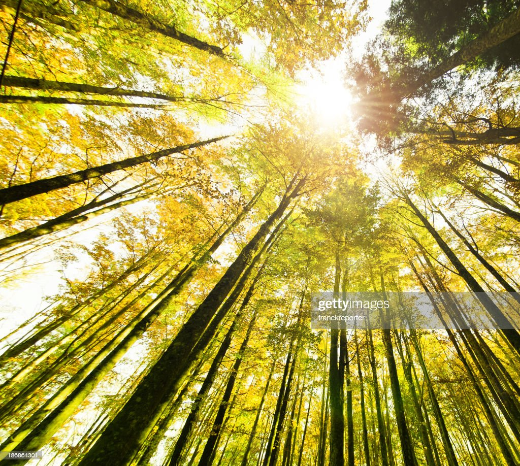 surrounded by tall trees spring season stock photo getty images