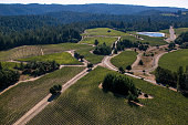 Surrounding grape vineyards in the Sonoma Coast wine appellation are viewed on August 27 near Annapolis California Despite the drought weather...