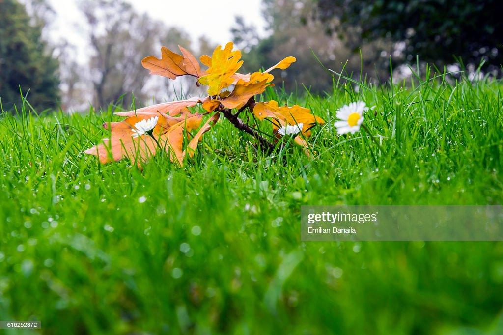 Surviving Autumn : Foto de stock