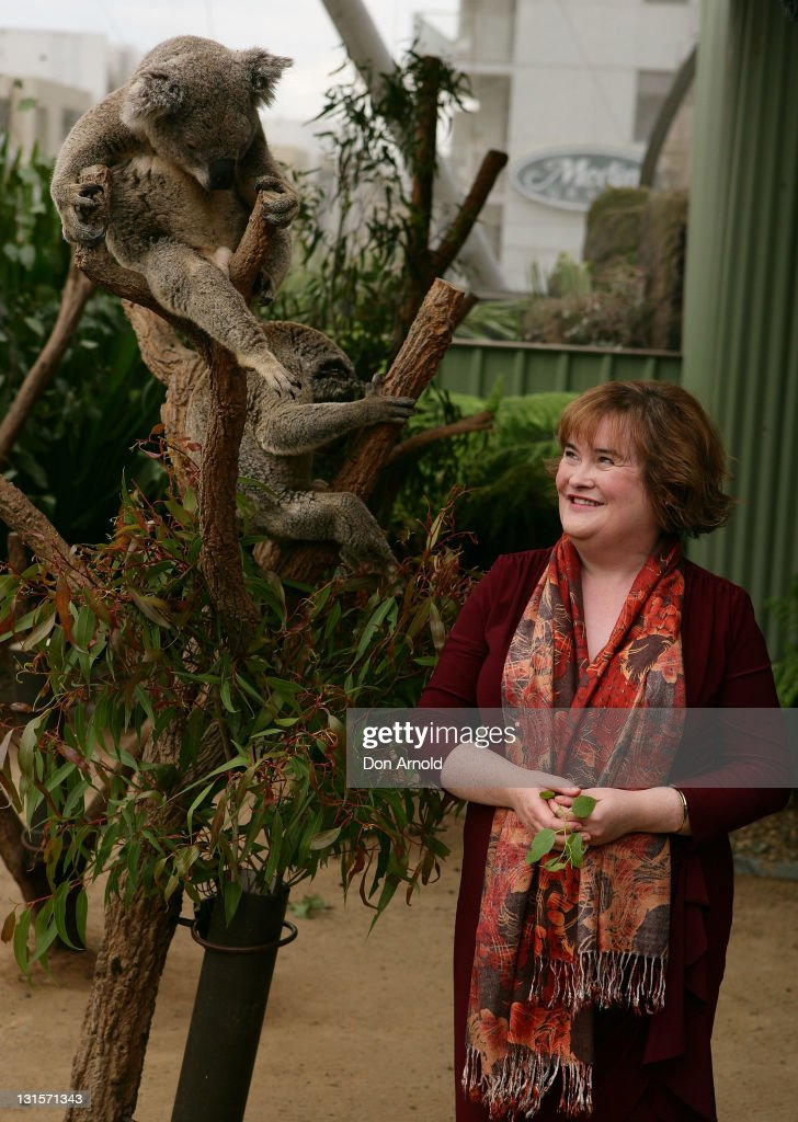 Susan Boyle poses alongside a koala during a visit to WILD LIFE Sydney on November 6 2011 in Sydney Australia This is Susan's first visit to Australia