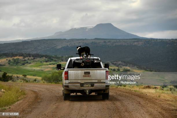 Susan Nottingham drives her truck through her land with Dome Peak in the background while her faithful border collie Izzy rides on top of an ATV in...
