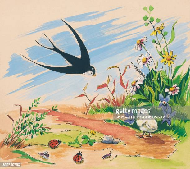 A swallow and a chick children's illustration drawing
