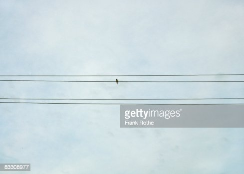Swallow on wires