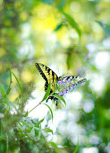 Swallowtail sitting on flower