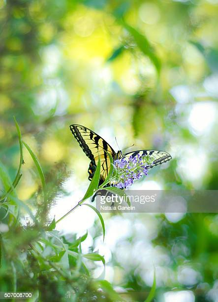 Swallowtail sitting on flower
