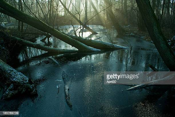 Swamp and Frost