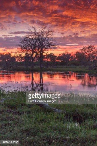 Swamp and trees at dusk, Okavango Delta, Chobe National Park, Botswana, Africa