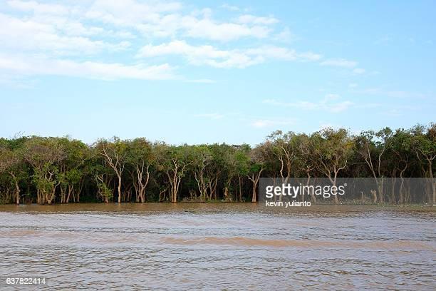 Swamp at Tonle Sap Lake, Siam Reap