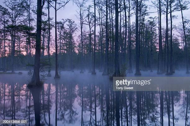 Swamp, dawn