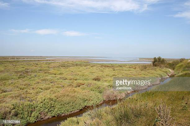 Swamp in French Camargue