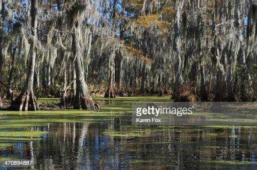 Swamp near New Orleans, Louisiana, USA