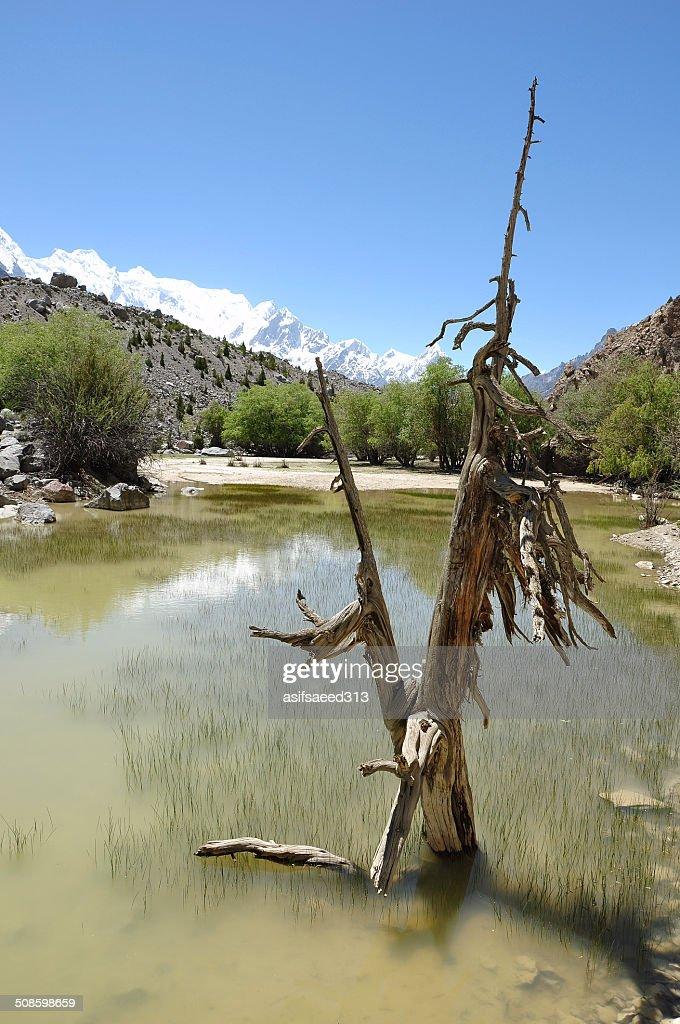 Swamp : Foto de stock