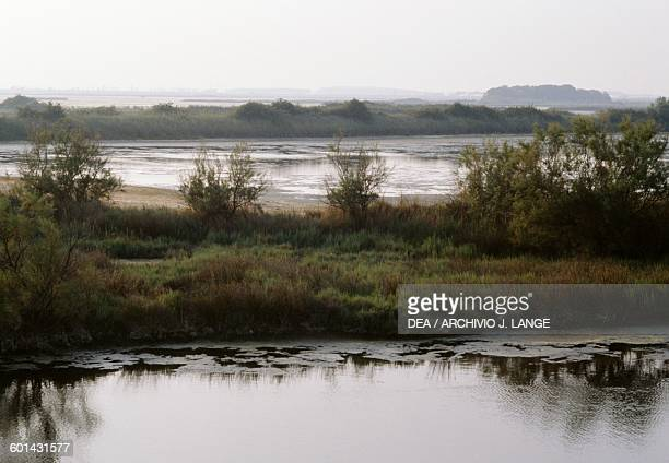 Swampy area in the Comacchio valleys EmiliaRomagna Italy