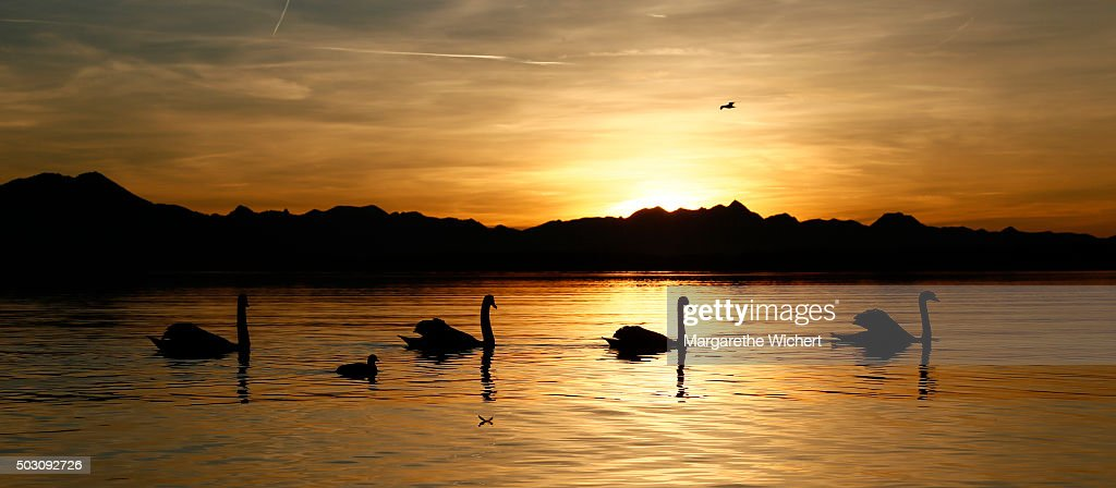Swans and ducks swim on the Chiemsee while the sun sets behind the alps on December 27, 2015 in Seebruck, Germany. After the warm temperatures during the Christmas time, weather experts forecast much colder temperatures for the upcoming days.