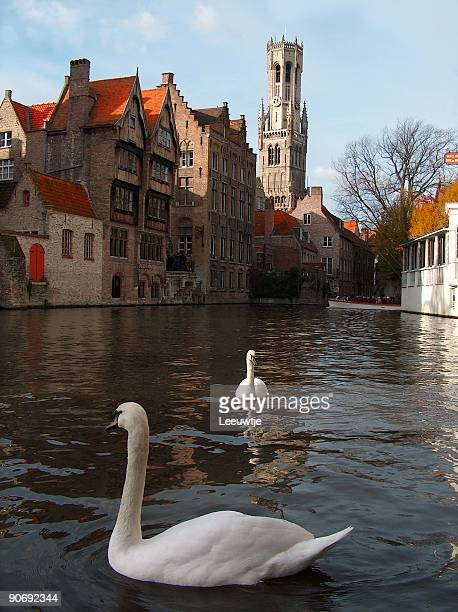 Swans and medeaval buildings bruges belgium