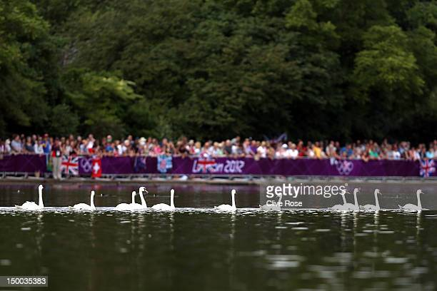Swans are seen in Serpentine Lake before the Women's Marathon 10km Swimming at Hyde Park on August 9 2012 in London England