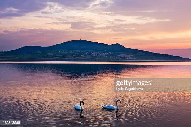 Swans on the Nove Mlyny Reservoir and Palava mountains, Breclav district, South Moravia region, Czech Republic, Europe