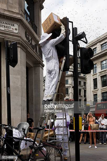 A swarm of bees appear on a set of traffic lights in central London at the junction of Regent Street and Hannover Street During a busy morning on...