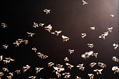 background of swarm of bees flies over the open evidence in a evening light