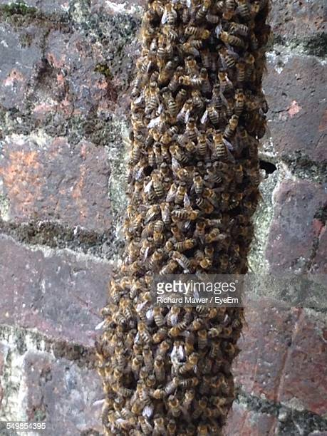 Swarm Of Bees On Brick Wall
