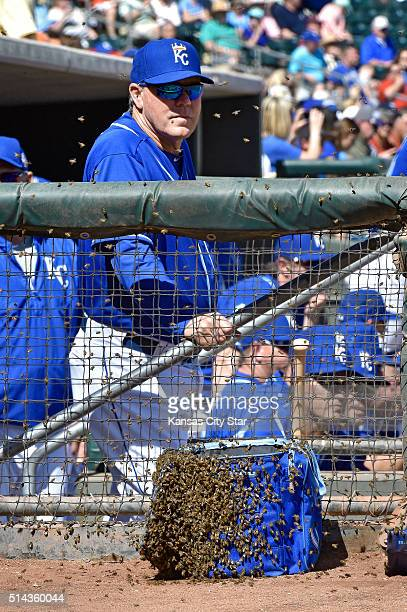 A swarm of bees settle on a bag near Kansas City Royals manager Ned Yost during a spring training game against the Colorado Rockies on Tuesday March...