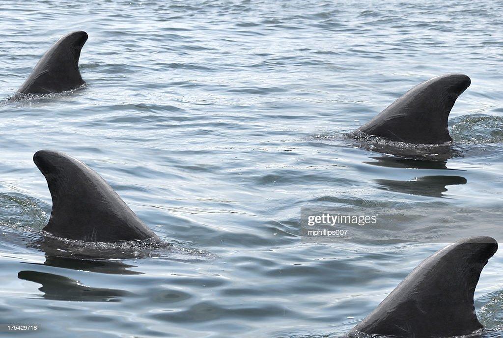 Swarming Sharks