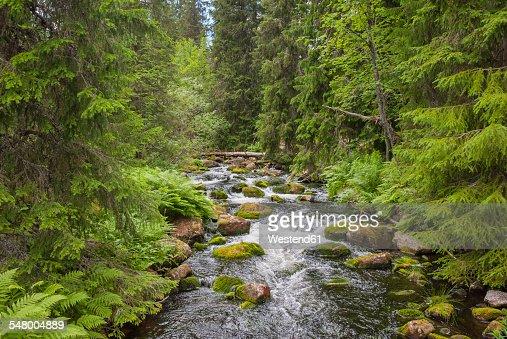 Sweden, Dalarna County, Fulufjaellet National Park, creek and forest