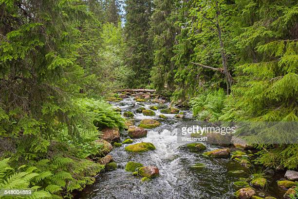 Sweden, Dalarna County, Fulufjaellet National Park, creek and forest