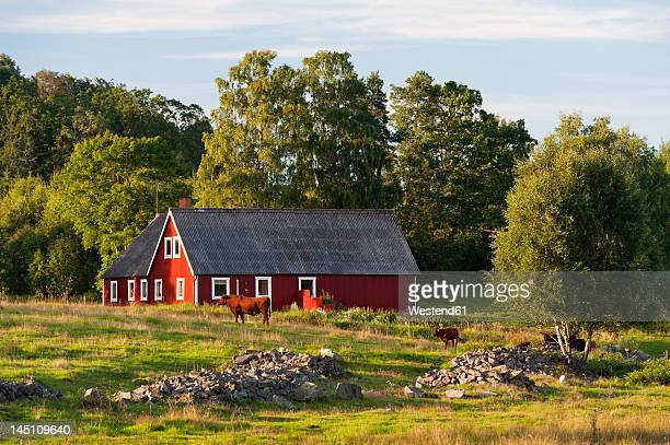 Sweden, Hoor, View of farmyard with cattles