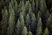 Sweden, Varmland, old-growth spruce forest, aerial view