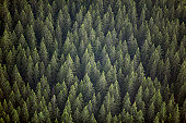 Sweden, Varmland, old-growth spruce forest, full frame, aerial view