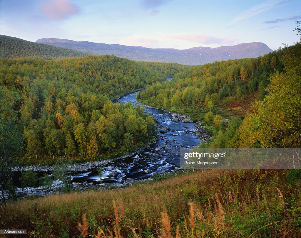 Sweden,birch forest in autumn along river,mountain in distance : Stock Photo