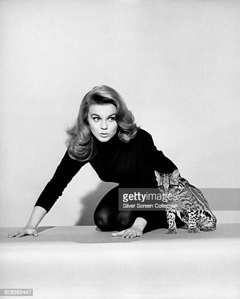 SwedishAmerican actress AnnMargret poses with an ocelot in a promotional still for 'Kitten With A Whip directed by Douglas Heyes 1964