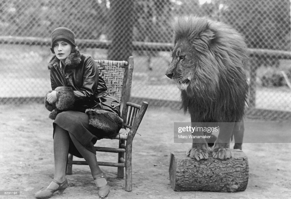 Swedish-born actress Greta Garbo (1905 - 1990) sits in a chair next to Leo, the lion mascot for MGM studios.