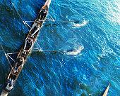 Sweep rowing crew, overhead view