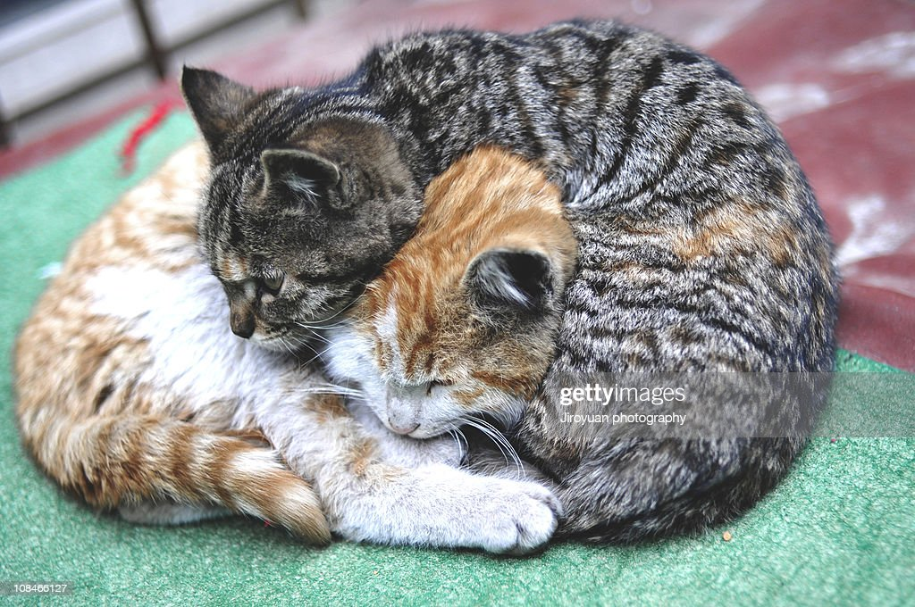 Sweet cats : Stock Photo