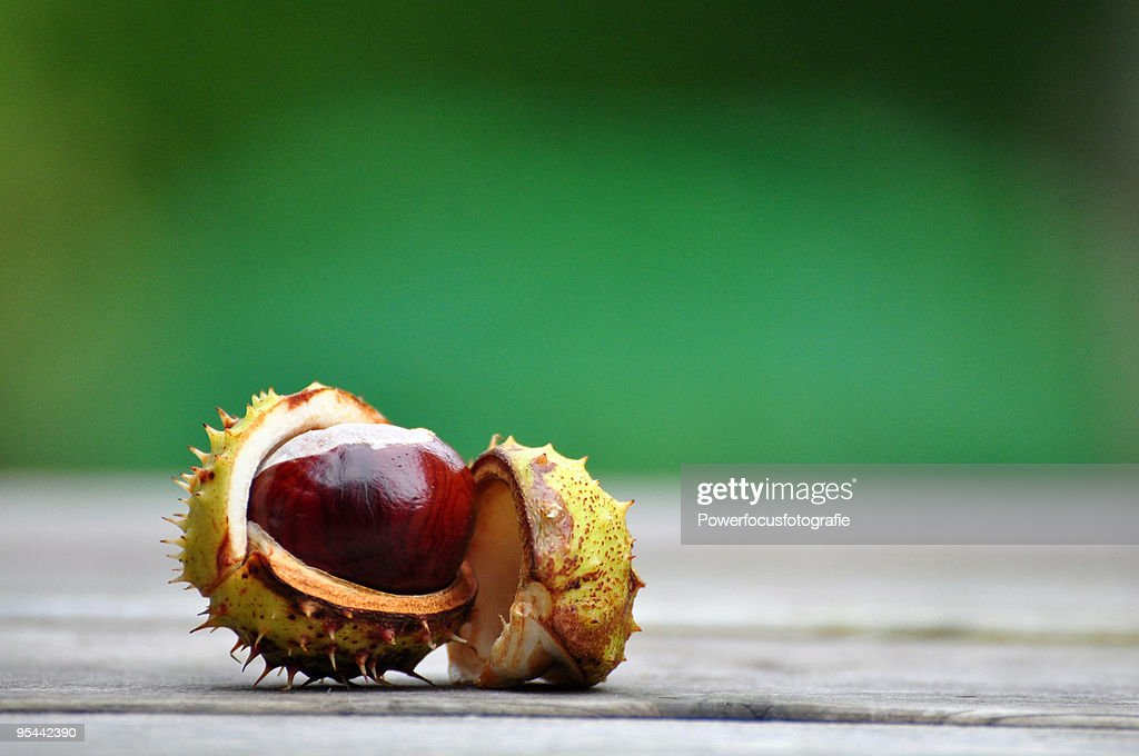A sweet chestnut with opened shell : Stock Photo