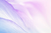 sweet color flower petals in soft color and blur style for background