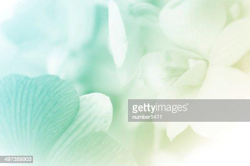 sweet color orchids in soft style : Stock Photo