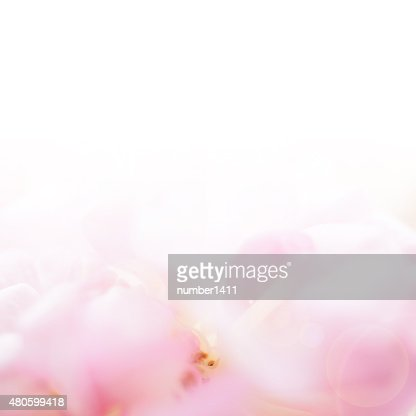sweet color roses in soft color and blur style : Stock Photo