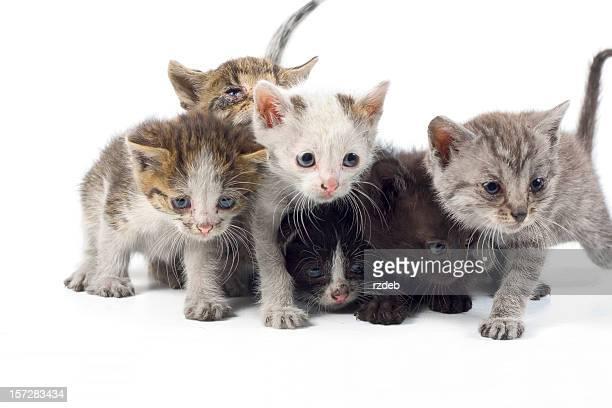 Sweet , little Cats