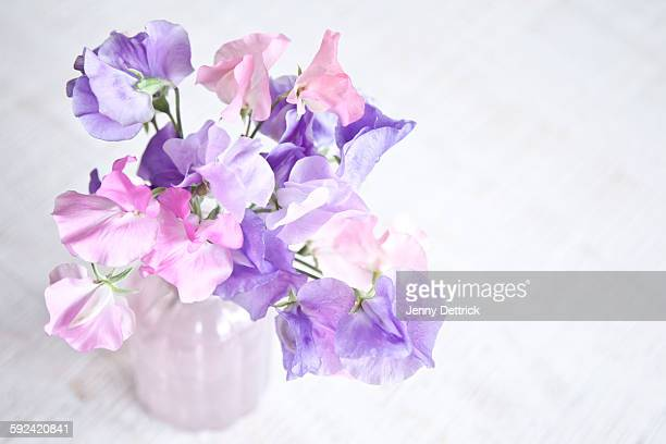 Sweet Pea flowers in a vase